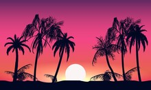 Sunset And Silhouettes Of Palm...