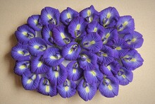 Butterfly Pea Flowers,clitoria Ternatea,Asian Pigeonwings Purple Flowers Background Texture Picture