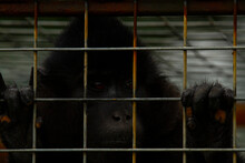 Close Up Image Of A Black Chim...