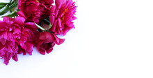 Pink Peonies On A White Backgr...