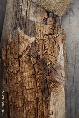 Fototapeta Drewno spróchniałe tło faktura obraz