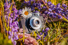 Old Camera Surrounded By Wildflowers Daisies And Lupins