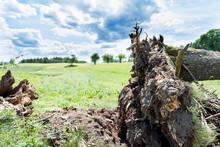 Blown Down Tree In The Farmers...