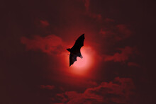 Terrible Horrible Bat Silhouet...