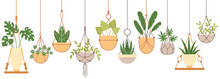 Plants In Hanging Pots. Set Of...