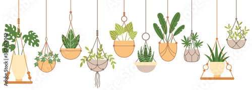 Plants in hanging pots. Set of plant hang on rope, houseplant garden, flowerpot grow, vector illustration