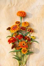 Marigold And Zinnia Flower Harvest