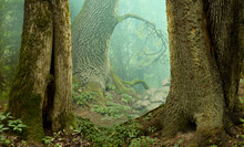 Mysterious Forest Landscape Wi...
