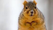 A Reasonable Look Of A Squirrel