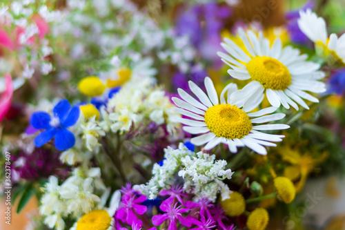 Fototapety, obrazy: Chamomile. Bouquet of field  of flowers. Nice flourish background