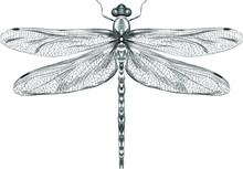 Dragonfly Black And White Sket...