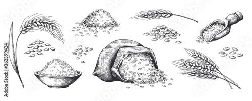 Obraz na płótnie Hand drawn wheat