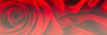 Red Rose Macro On Velvet