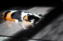 Trójkolorowy Szylkretowy Kot Z Zielonymi Oczami Leżący W Słońcu Podłodze Na Kafelkach