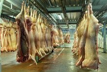 Red Meat Or Animal Products At...
