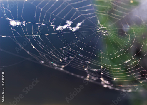Foto Spider web silhouette with light blue and green back ground