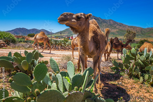 фотография Morocco main attractions