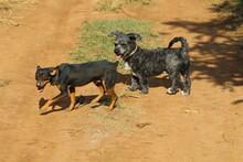 DOGS VIRA LATAS