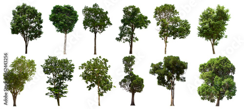 isolated tree green set is located on a white background.Collection of isolated tree green on white background Tropical tree