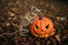 Halloween Concept. Pumpkin Jac...
