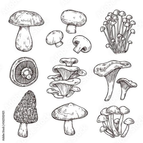Fotografia Sketch mushroom
