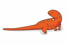 Newt Cartoon Salamander Animals Illustration
