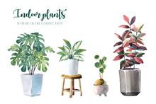 Water Color Indoor Plants (Mon...