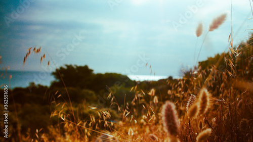 Fototapety, obrazy: sunset in the field