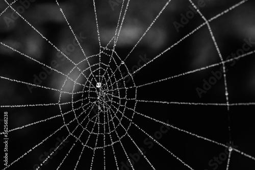 Fotografija Close-up Of Spider Web