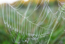 Close-up Of Spider Web On A De...