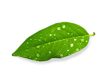 Green Leaf With Water Drops On...