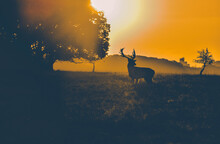 Silhouette Deer On Field Again...