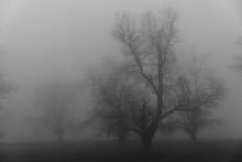 Bare Tree On Landscape In Fogg...