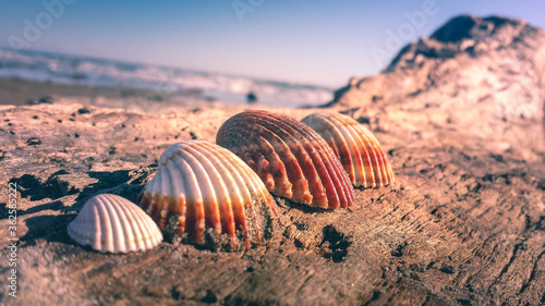 Stampa su Tela Close-up Of Seashell On Beach