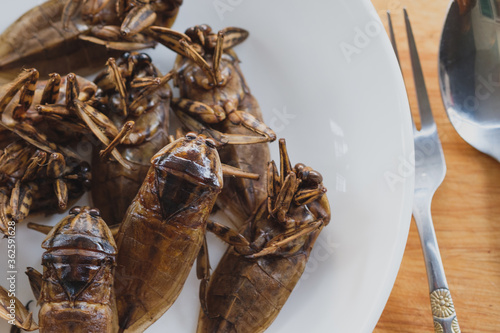 Giant Water Bugs Canvas Print