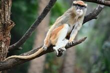 Close-up Of Monkey Sitting On ...