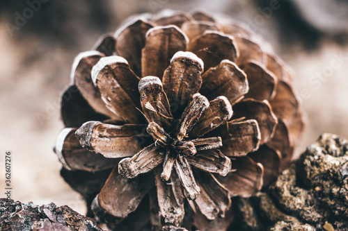 Photo Close-up Of Pine Cone