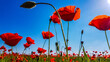 canvas print picture Poppies In The Sky