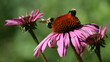 canvas print picture Close-up Of Bee On Pink Flower