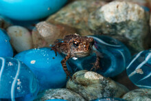 Close-up Of Very Small Tiny Little Frog - Toad