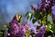 canvas print picture Close-up Of Butterfly Pollinating On Purple Flower