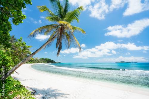Obraz Tropical beach with palm tree - fototapety do salonu
