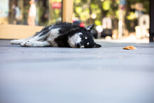 Sleeping Dog In The Street