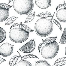 Citrus Seamless Pattern. Hand Drawn Vector Illustration. Mandarin And Orange Sketch Background. Vintage Design Template.