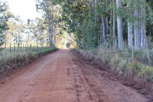 Red Dirt Road Bordering An Eucalyptus Grove