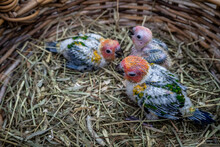 High Angle View Of Young Birds...