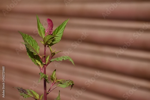 Photo Close-up Of Potted Plant