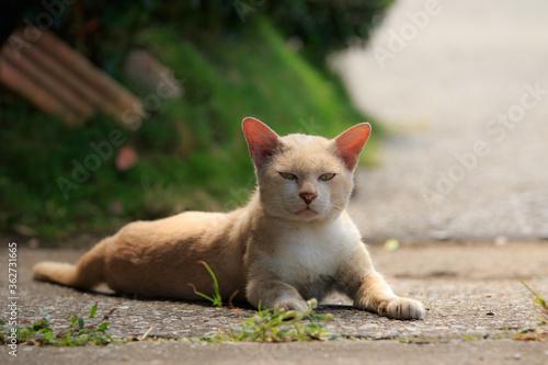 Canvastavla Portrait Of Ginger Cat Sitting On Footpath