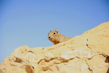 Low Angle View Of Squirrel On Rock Against Clear Blue Sky