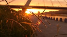 Close-up Of Grass Against Bridge During Sunset